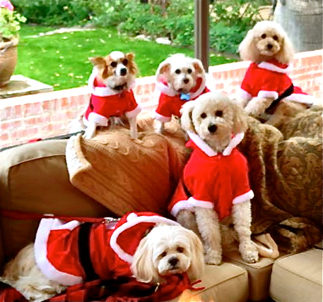 santapuppies